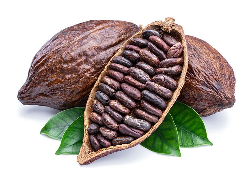 seme di cacao